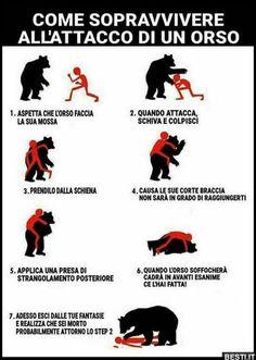 Attacco di un orso