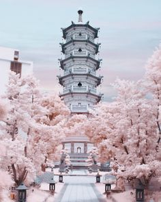 Japan japan cherry blossom season, cherry blossoms, japan sakura, v Aesthetic Japan, Japanese Aesthetic, Japan Sakura, Japan Japan, Okinawa Japan, Kyoto Japan, Food Japan, Places Around The World, Around The Worlds