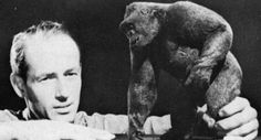 """Ray Harryhausen with gorilla model for """"Mighty Joe Young."""" (1949)"""