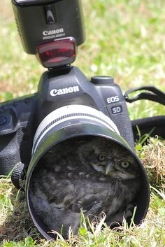 Look before you shoot. incredible!!!!!! how did the owl ever squeeze in there?!!