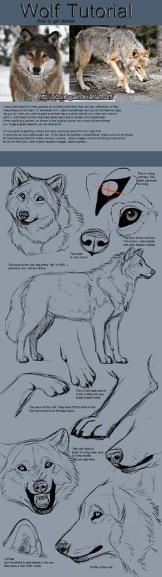 Wolf Tutorial by TheMysticWolf on Deviantart Much need. Much want. More