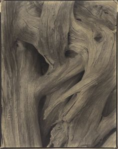 Driftwood, Maine; Paul Strand (American, 1890 - 1976); 1928; Varnished platinum…