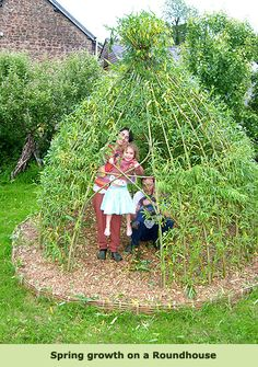 Living Willow Structure Installations and Kits