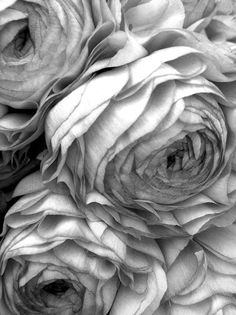 grey.quenalbertini: Light grey flowers