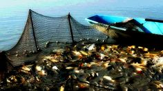 fishing nets,Allah, children of israel, fish, Fishing, Friday, Islam, israel, Jews, monkeys, Moses, Musa, pigs, Prophet, Quran, Sabbath, Saturday, Sin, Sunday, swines, Taurat, Torah