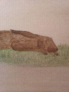 Sleeping Hare by Deborah Sheehy