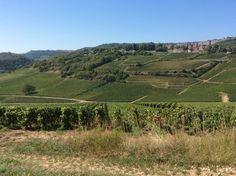 Le vignoble de Saint Romain -Bourgogne