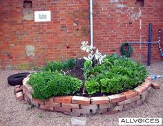 keyhole garden in action