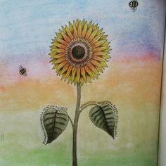 Sunflower Aycicegi Painting Secret Garden Esrarengiz Bahce Jardimsecreto