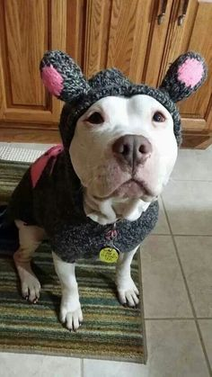 I need to find Willow an outfit like this! (I love this pittie's therapy dog tag!!)