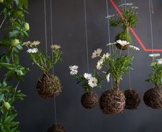 Art and urban gardening at its finest! Amsterdam horticulturist Fedor has created string gardens by designing root balls made of string, mos...