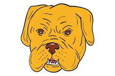 Bordeaux Dog Head Cartoon - Illustrations.Illustration of a Dogue de Bordeaux, Bordeaux Mastiff, French Mastiff or Bordeaux dog, a large French Mastiff breed one of the most ancient French dog breeds head viewed from front set on isolated white background done in cartoon style. #illustration #BordeauxDog