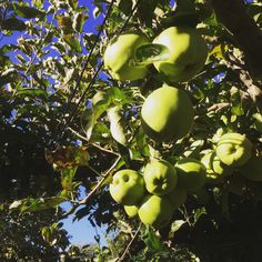 appelbomen doen het geweldig!!