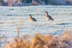 Claes`s Photo blog: winter wonderland