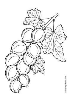Gooseberry fruits and berries coloring pages for kids, printable free