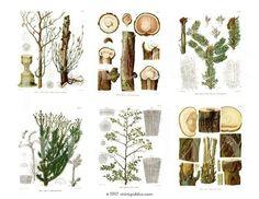 For botany work - piddix on etsy