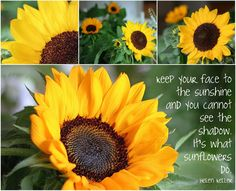 Mosaic Monday ~ Sunflowers...