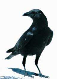 Kali ini kita akan bahas mengenai mitos-mitos dunia yang bersangkut paut dengan kematian. Mitos-mitos ini berasal dari seluruh penjuru dunia dan kami mengelompokkannya kedalam 10 tanda kematian menurut mitos yang beredar ! Burung berada di Jendela kamu !Kepercayaan Romawi Kuno menganggap, jika ada burung yang hinggap di jendela kamu, terutama jika burung tersebut merupakan burung