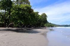 espadilla beach trees   - Costa Rica