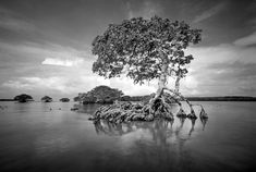 With Mystical Black and White Landscapes, Clyde Butcher Aims to ...