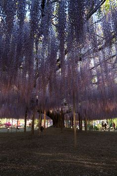 Ashikaga #Tochigi #JapanWeek  Subscribe today to our newsletter for a chance to win a trip to Japan http://japanweek.us/news  Like us on Facebook: https://www.facebook.com/JapanWeekNY