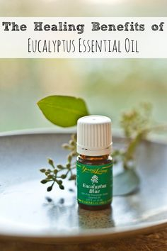 The Healing Benefits of Eucalyptus Essential Oil - Moms Need to Know Young Living Oils, Young Living Essential Oils, Home Remedies, Natural Remedies, Seasonal Allergies, Organic Coconut Oil, Herbalism, The Cure, Essentials