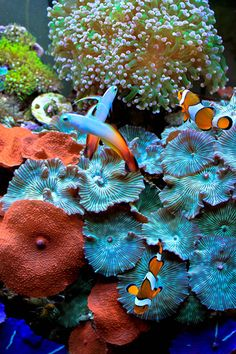 naturalwonders    Congratulations to Naturalwonders for being selected for our May Reef Profile! His 15 gallon nano reef has beautifully matured into a mushroom garden packed with life. Below is the profile hes written for us sharing his exp...
