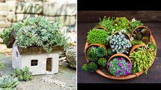 mais. Succulent Gardening, Cacti And Succulents, Planting Succulents, Cactus Decor, Plant Decor, Air Plants, Garden Plants, Diy Bay Window Curtains, Diy Cement Planters