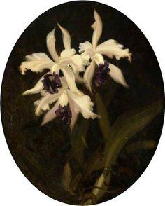 Orchids by Stuart Park (1862-1933)
