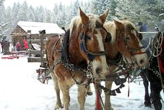 a sleigh ride . Interesting Animals, O Holy Night, Over The River, Merry Christmas To All, Winter Pictures, Vintage Music, Its A Wonderful Life, Travel Light, Winter Time