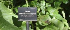 Ботанический сад | Аптекарский огород | ВКонтакте   21 июн в 17:08