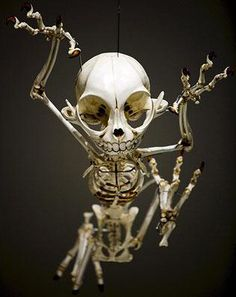 Animatus Cartoon Skeleton Hyungkoo Lee Donalduck Hyungkoo - Skeletons favourite childhood cartoon characters