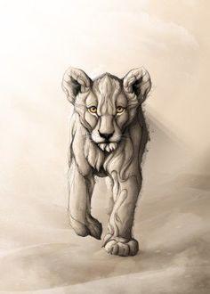 lion animal animals simba king nature desert lions