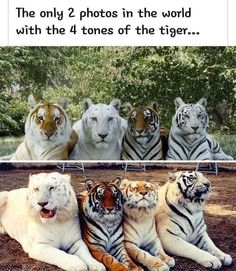 Cute Little Animals, Cute Funny Animals, Funny Cute, Cute Cats, Funny Animal Memes, Funny Animal Pictures, Beautiful Creatures, Animals Beautiful, Warrior Cats