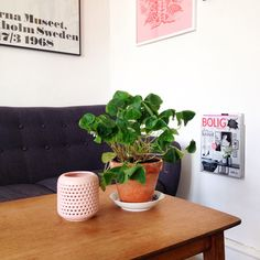 Mit lille hyggehjørne Planter Pots, Box, Snare Drum