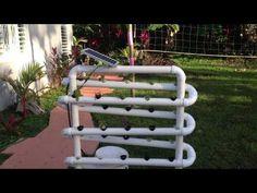Cultivo hidroponico casero en Puerto Rico - YouTube