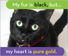 Click through to learn about the difficulties black pets face, then share to help them find homes!