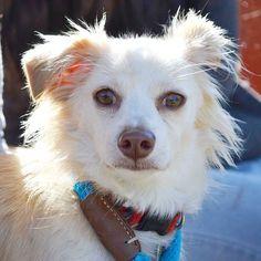 Dog Adoption San Diego - Adopt A Dog | Helen Woodward Animal Center