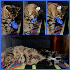 Pacino getting high on catnip!