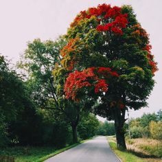 #kaliningrad #autumn #tree #осень #дерево #калининград