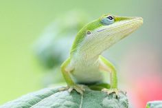 50 Examples of Animal Photography