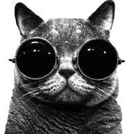 Cats Whose Future So Bright They Have To Wear Shades ... #pets #animals # cats ... PetsLady.com | via @roncallari