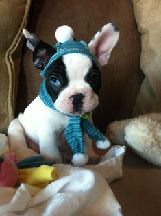 cute puppy                                                       …