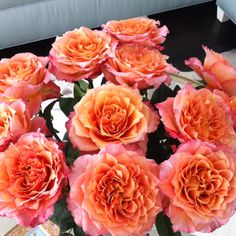 Orange Garden Rose free spirit roses from stevens & sons - amazing! | flower types