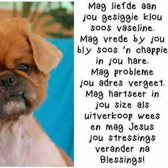 Mag dit ' n fantastiese dag wees Morning Blessings, Good Morning Wishes, Birthday Wishes For Women, Afrikaanse Quotes, Goeie More, Abc For Kids, Special Words, Deep Thoughts, Quote Of The Day