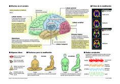 """Não é umgrupo 'new age' ou um amante da pseudociência ou falsa espiritualidade que o diz, mas uma equipe de psiquiatras do Hospital Geral de Massachusetts, que realizou o primeiro estudo acerca do impacto da meditação no nossocérebro. De acordo com osresultados, publicados na Psychiatry Research, praticar meditação durante oito semanas pode causar mudanças significativas nas regiões do cérebro associadas com a memória, auto-conhecimento, empatia e stress. """"Embora a prática da meditação…"""
