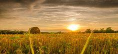 Corn harvest by Tomasz Tomczak on 500px