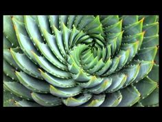 Research Reveals Plants Can Think, Choose & Remember - YouTube