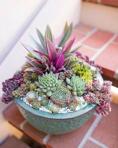 Growing Succulents, Succulents In Containers, Faux Succulents, Container Flowers, Planting Succulents, Planting Flowers, Succulent Planter Diy, Succulent Arrangements, Suculentas Interior