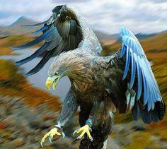Let the eagles fly. Pretty Birds, Beautiful Birds, Animals Beautiful, Photo Aigle, The Eagles, Bald Eagles, Tier Fotos, Big Bird, Birds Of Prey